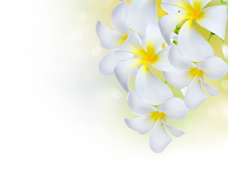 Frangipani Spa Flowers Stock Photo - 11559858