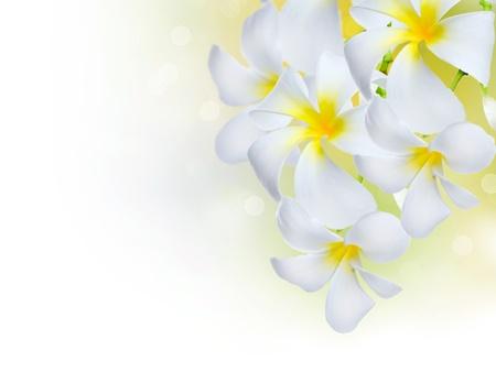 exotic flower: Frangipani Spa Flowers