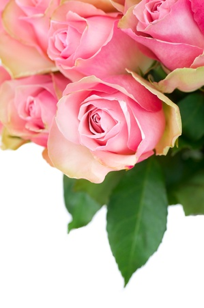 Roses Bunch  photo
