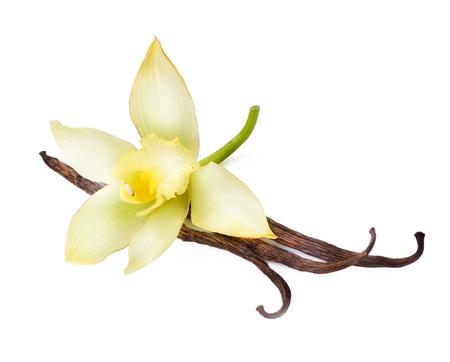 flor de vainilla: Vainilla