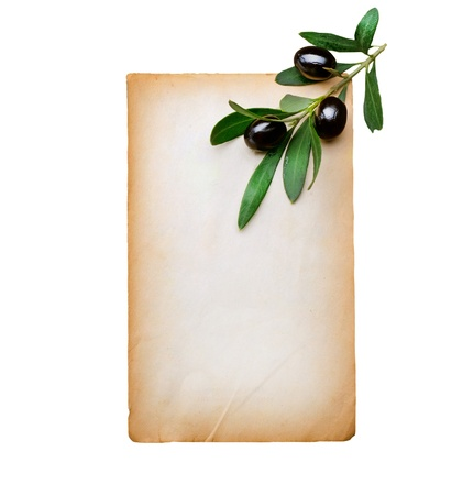 Blank Paper and Olive Branch isolated on white photo