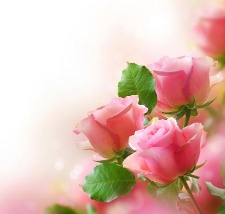 rosas rosadas: Rosas