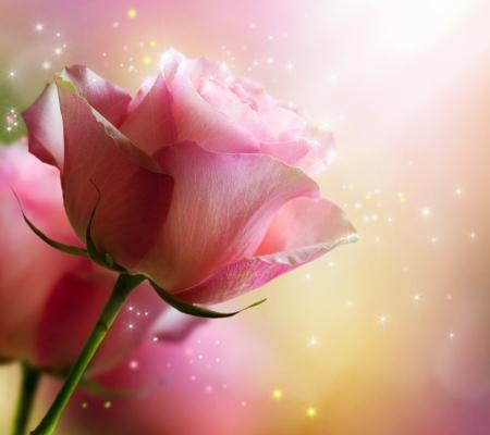 romantico: Rosa