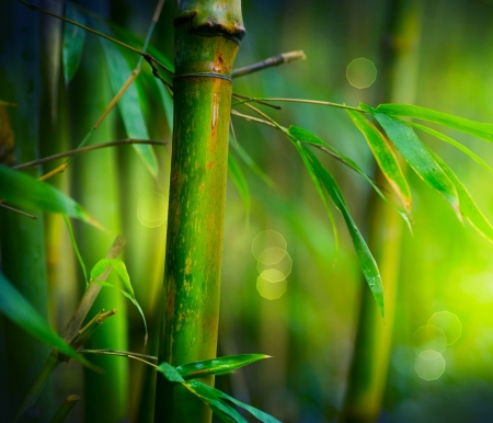 bamboo leaves: Bamboo  Stock Photo