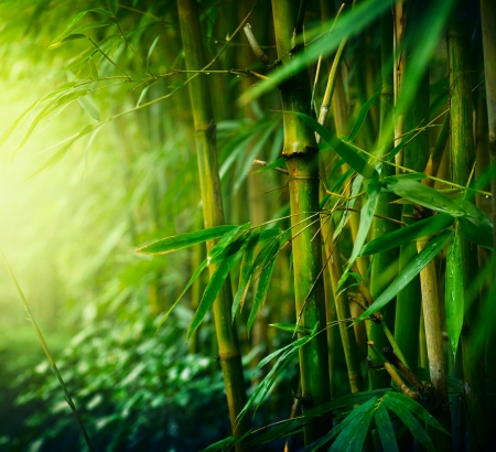 zen garden: Bamboo  Stock Photo