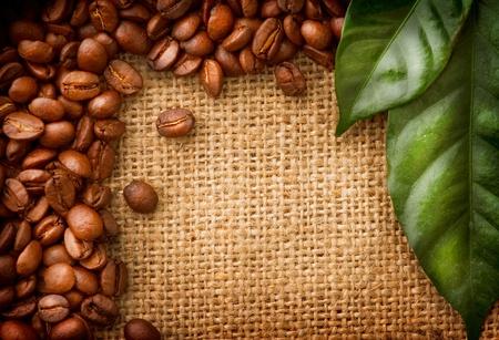 planta de cafe: Coffee Beans Fronteriza de diseño café y las hojas