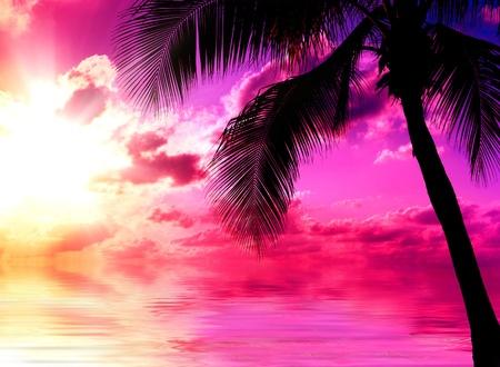 sunset palm trees: Sunset Beach  Stock Photo