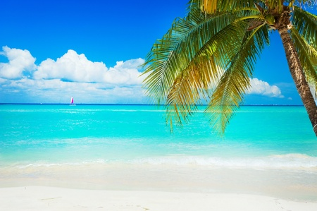 caribbean island: Beach  Stock Photo