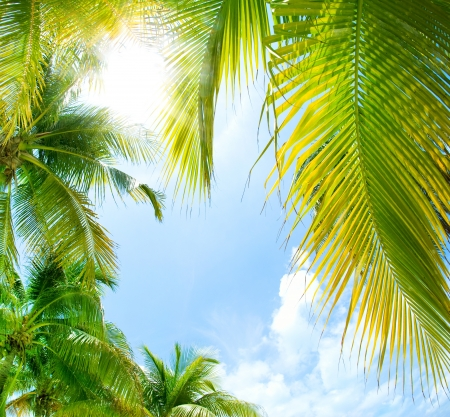 on palm tree: Tropical Background