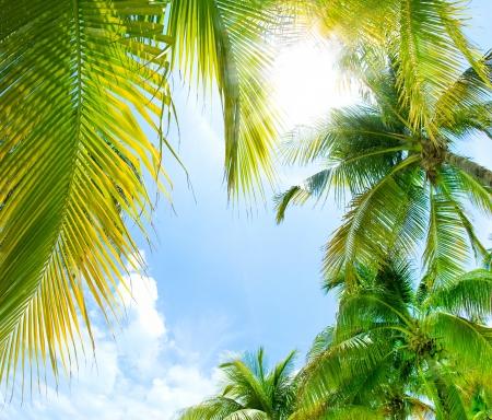 tropics: Tropical Background