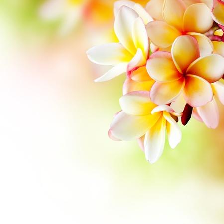 cenefas flores: Frangipani Spa Tropical Plumeria Flor diseño de la frontera