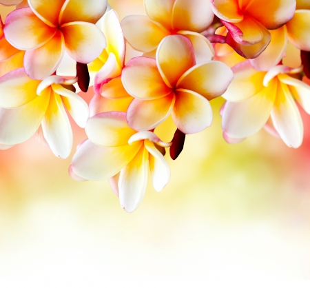 Frangipani Tropical Spa Flower  Plumeria Border Design  photo