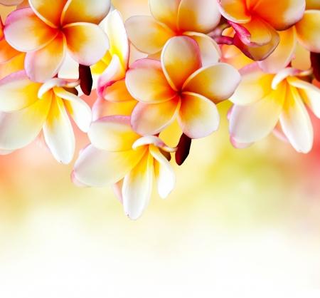 tahitian: Frangipani Tropical Spa Flower  Plumeria Border Design