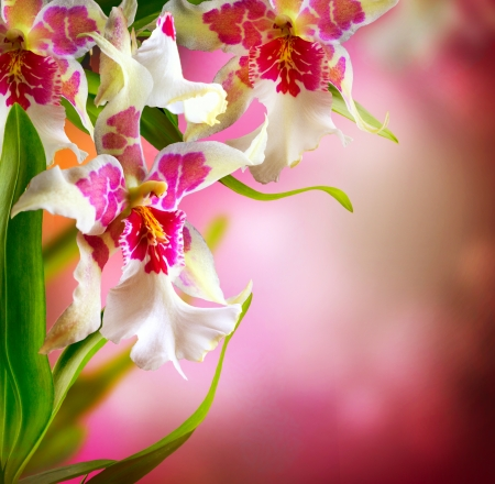flowers bokeh: Orchid Flowers Design
