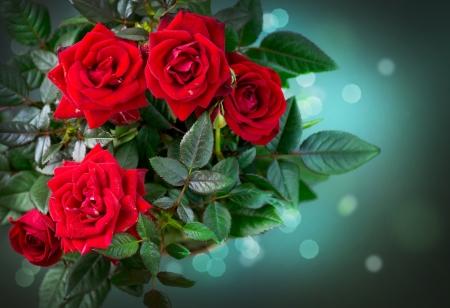red roses: Flores Rosas Rosa Foto de archivo