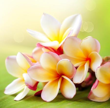 flores exoticas: Frangipani Plumeria Flor Tropical Spa Foto de archivo