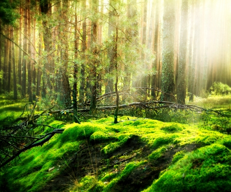 beautiful woodland: Forest