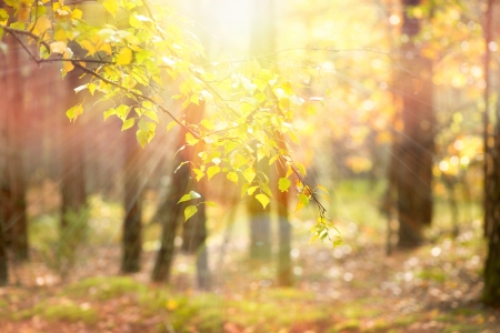 backlit: Autumn  Fall  Stock Photo