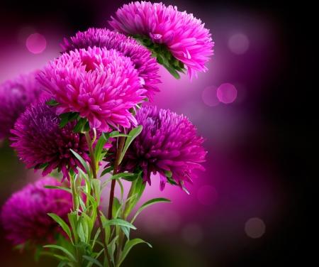 달리아: 애 가을 꽃 예술 디자인