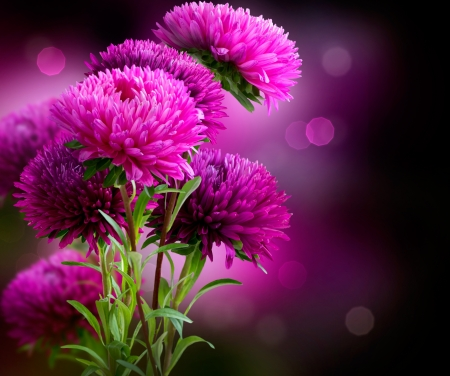 aster flowers: Aster Autumn Flowers Art Design