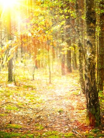 woodlands: Autumn  Fall  Stock Photo