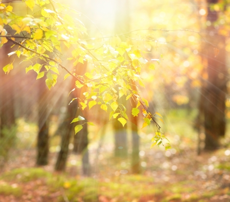 woodland scenery: Autumn  Fall Stock Photo