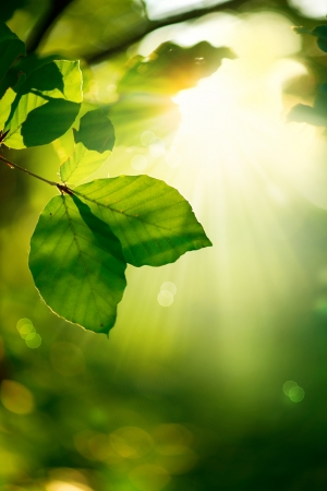 Natuur achtergrond groene bladeren en Zonnestralen