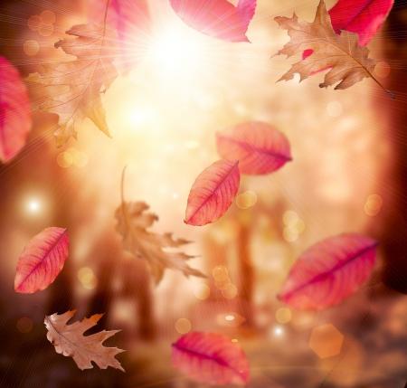 秋紅葉秋の背景
