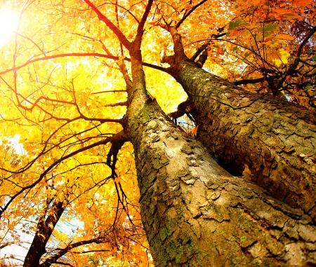 foresta: Alberi di autunno Autunno Archivio Fotografico