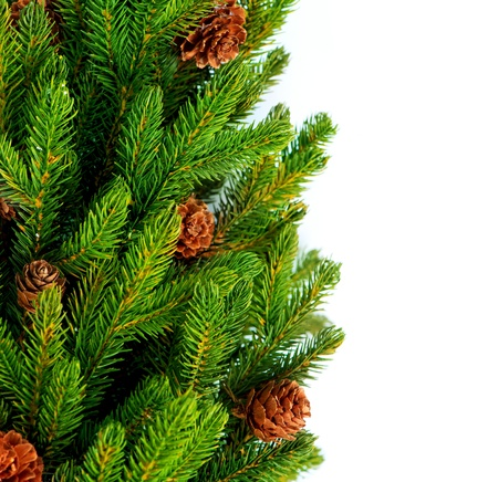 fir twig: Christmas Tree with Cones border isolated on a White background