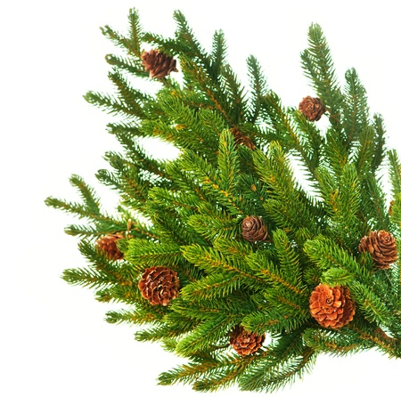 Christmas Tree Branch with Cones border isolated on a White  photo