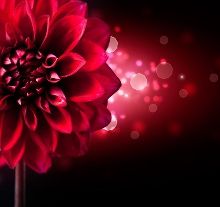 Dahlia Flower Design over Black Background  photo