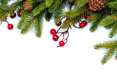 abeto: �rvore de Natal da beira isolado no branco
