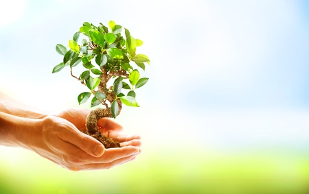 Human Hands Holding Green Plant Over Nature Background  photo