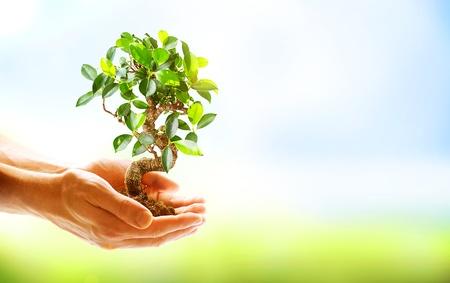 Menschliche H�nde halten gr�ne Pflanze �ber Natur-Hintergrund Lizenzfreie Bilder