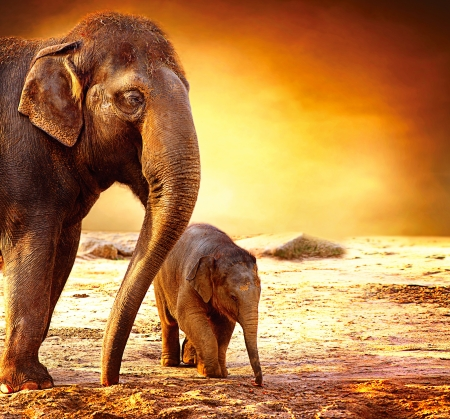 Elephant Mother and Baby outdoors  Stock Photo
