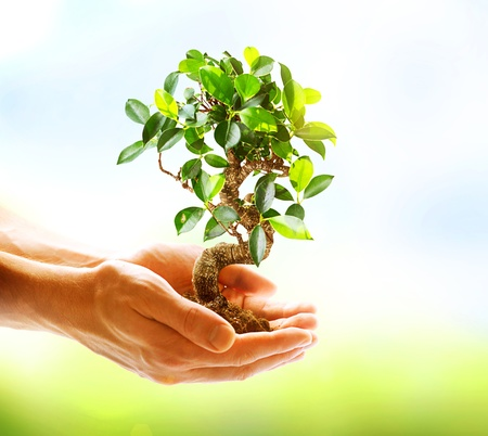 small plant: Human Hands Holding Green Plant Over Nature Background