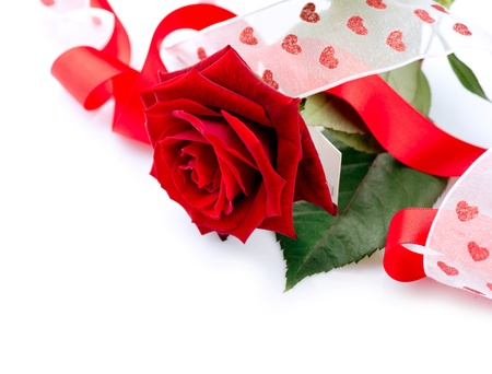 Valentines Gift  Rose Flower with Ribbon isolated on white  photo