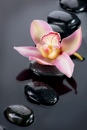 basalt: Spa Stones and Orchid Flower over Dark Background