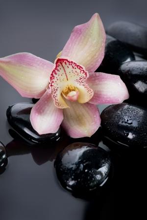 obrero: Spa Piedras y flor de la orqu�dea sobre fondo oscuro