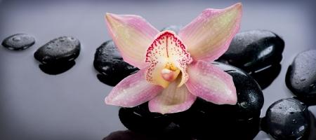 peluqueria y spa: Spa Piedras y flor de la orqu�dea sobre fondo oscuro