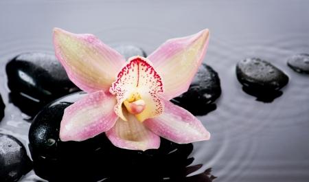 zen flower: Spa Stones and Orchid Flower over Dark Background