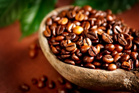 coffee coffee plant: Coffee beans  Bowl of Aromatic Coffee close-up