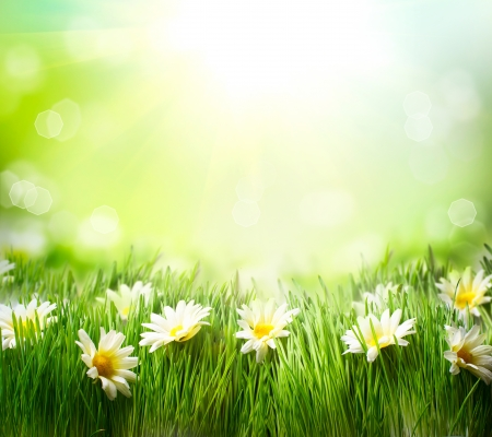 Spring Meadow with Daisies  Grass and Flowers border