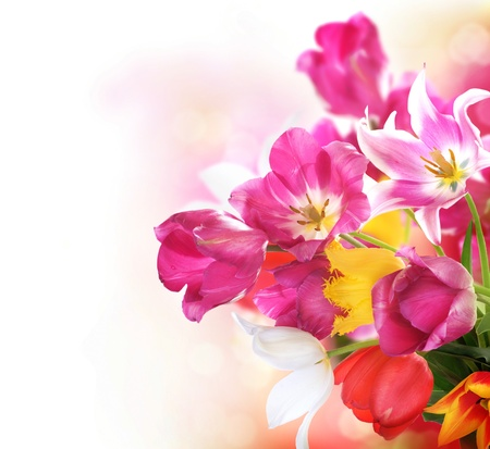 multi colors: Spring Flowers  Tulips bunch  Stock Photo