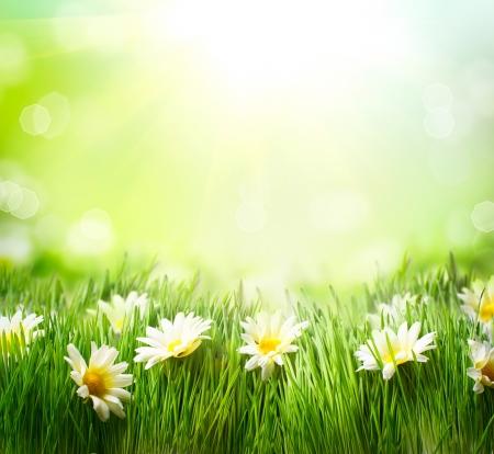 ヒナギクの草と花の境界線と春の牧草地