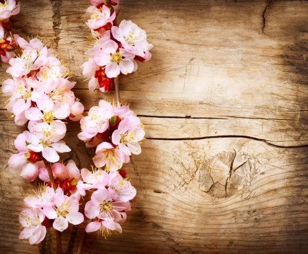 april flowers: Spring Blossom over wood background  Stock Photo