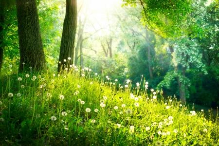 봄 자연 아름다운 풍경 푸른 잔디와 나무