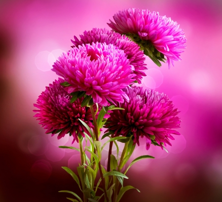 aster flowers: Aster Flowers Bouquet Art Design