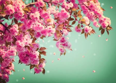 zen flower: Sakura Flowers Background art Design  Spring Sacura Blossom